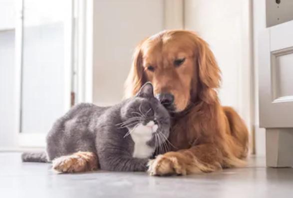 Pet Treater Coupon Code