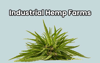 Industrial Hemp Farms Review | Best Wholesale CBD Hemps And Clones
